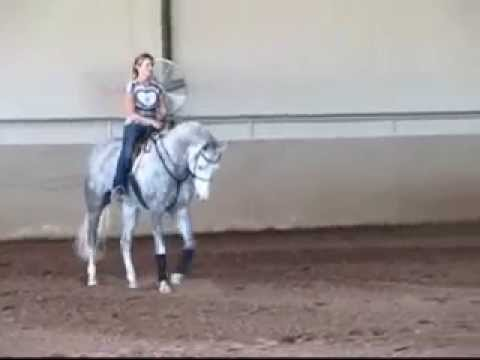 PHI ME TO THE MOON Arabian Hunter Horse For Sale