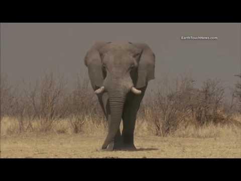 Enviro Report 004 (2016-07-04 to 2016-07-10) Coal Pollution, Elephants, JUNO Probe
