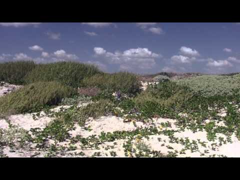 Primitive Beach Camping at Padre Island National Seashore, Texas