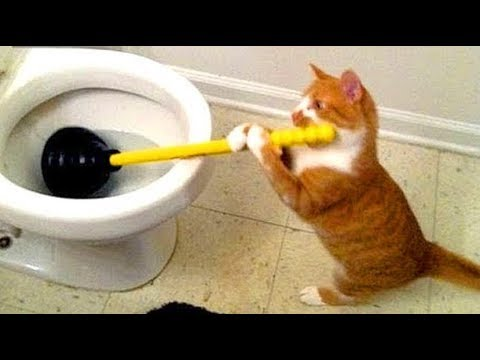 Funny cat videos || funny cat || funny cat videos cucumber