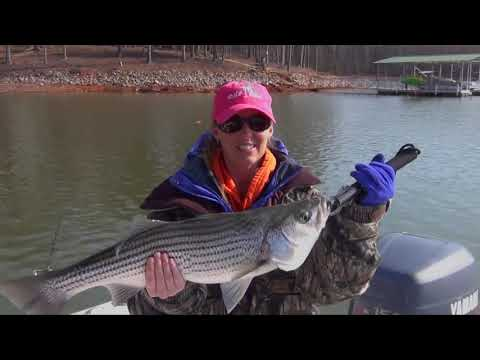 Lake Hartwell fishing 2013