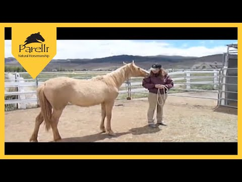 Wild Mustang Trained with Parelli - First 90 Days of Horse Training Music Videos
