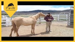 Wild Mustang Trained with Parelli - First 90 Days of Horse Training