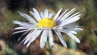 Ca khúc tạ ơn tôn vinh (Mỹ Dung) David Dong