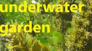 underwater garden - animals and plants living in the ocean