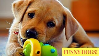Ultimate FUNNY DOGS & CUTE PUPPIES of 2018  Try Not to Laugh Animals & Pets Compilation - Part-2
