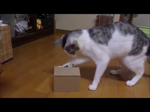 猫がネコ貯金箱のスイッチポン☆
