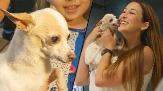 Missing Chihuahua from California Found in Arizona Reunites with Family