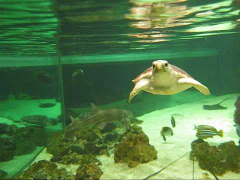turtle attack_0003.wmv