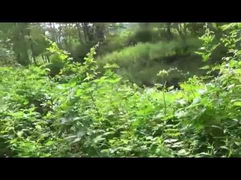 8/2/14 Part 1 Ongoing Sasquatch Investigation In Local Preserve