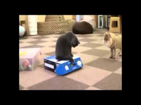 Bully Cat and the Box - The Translation