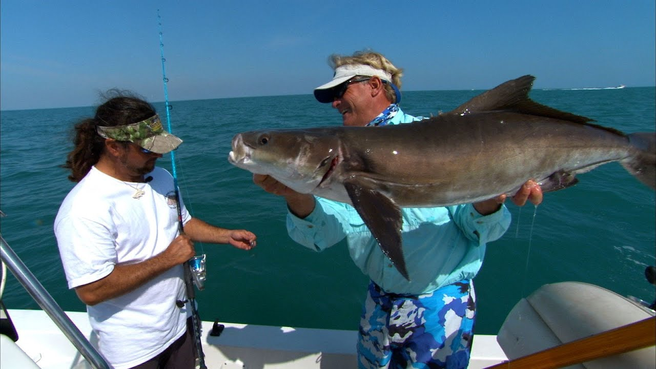 Cocoa beach cobia best eating fish on the planet youtube for Best florida fish to eat
