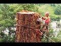 Sequoia 46 mt. abbattimento controllato, tree climbing controlled cut down big tree.