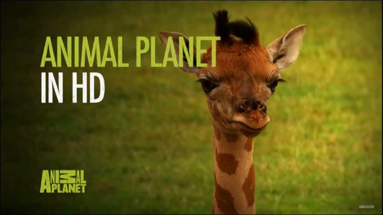 Wildlife Stock video footage