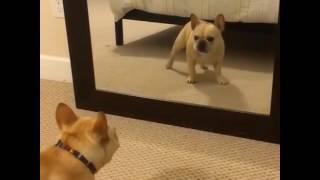O que esse cara tá fazendo? Dançando ou estranhando o ser que está na frente do espelho?