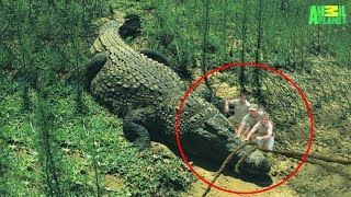 7 Largest Crocodiles Ever Recorded