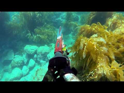 Catalina Island Spearfishing and Freediving 2014