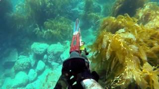 Catalina Island Spearfishing and Freediving 2014