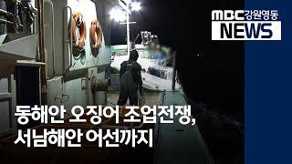 R)동해안 오징어 조업전쟁, 서남해안 어선까지 합류