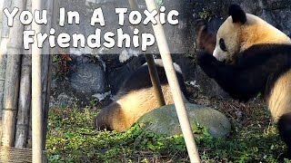 Panda In A Toxic Friendship | iPanda