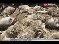 Diduga Diserang Anjing Liar, Puluhan Hewan Ternak Mati Mendadak di Probolinggo - iNews Petang 27/08 MP3