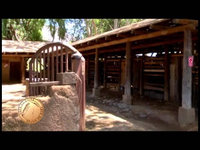 Criadero de Caballos Chilenos Santa Elba