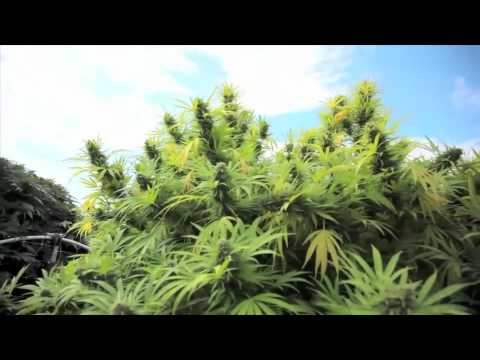 Jorge Cervantes: Medical Marijuana Outdoor Gardens Tour