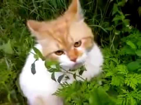 Никогда, слышишь, никогда не зли кота!