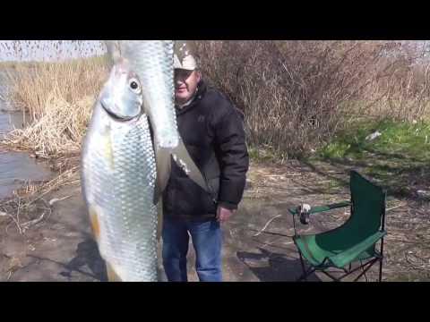 ловля на фидер в англии видео