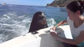 Feeding the sea lions!