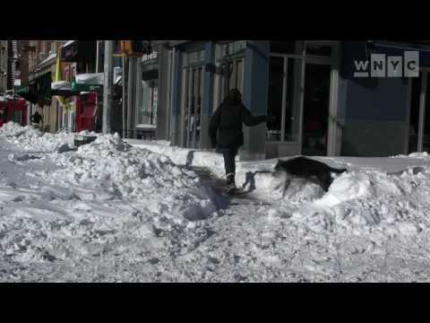 2010: NYC Dogs Enjoying the Snow