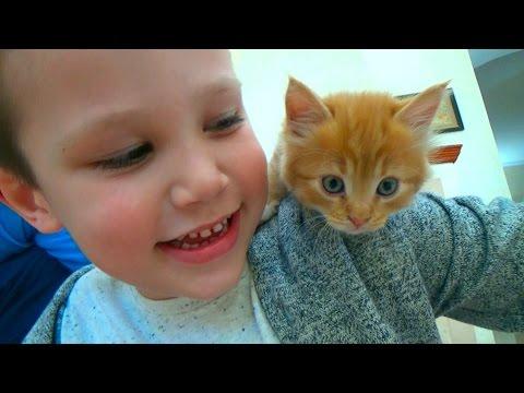 Кошечка Мурка покупаем питомца Максу и Кате ВЛОГ на рынке животных