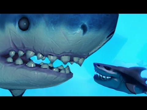 Level 500 Mega Shark Feed And Grow