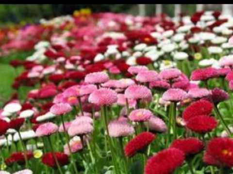 Antonio vivaldi la primavera youtube - Fiori da giardino primavera estate ...