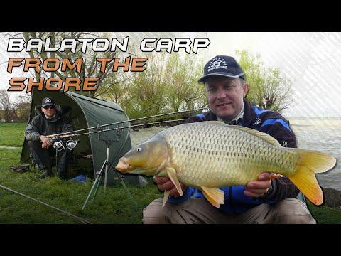 ловля на фидер в венгрии