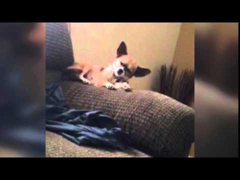 犬が寝落ち・・します