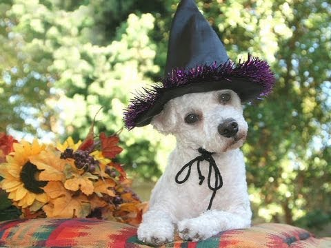 The Uzoo Gallery: Halloween Pet Costumes