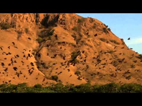 Komodo National Park Indonesia S Juric Park Of Komodo Dragons