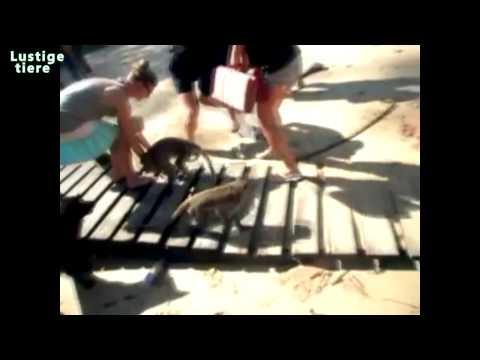 Lustige Affen stehlen Dinge Compilation Juli 2014