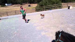 Baby miniature horse chasing a person 1