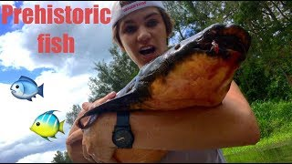 Catching a living DINOSAUR (100million year old fish)
