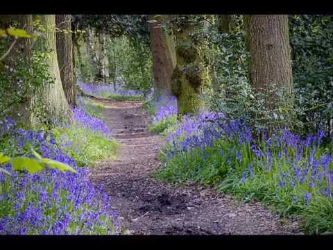 Flowers of the Forest, mandolin / tenor guitar instrumental