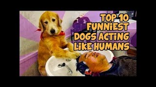 TOP 10 FUNNIEST DOGS WHO ACT LIKE HUMANS - CatFunnies