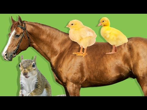 Hayvanları Öğreniyoruz | Çocuklar İçin Hayvanlar | Çiftlik ve Orman Hayvanları