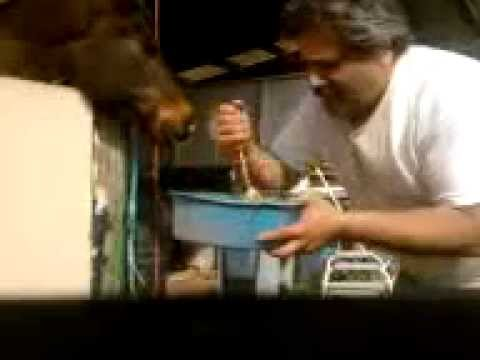 Dog Face Cooking Network part 2 – YouTube.mp4