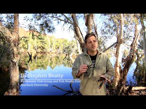 Pilbara Freshwater Fishes is a documentary that has been produced by ENVfusion films in partnership with Murdoch University and Rangelands and WA State NRMs to video document the freshwater...