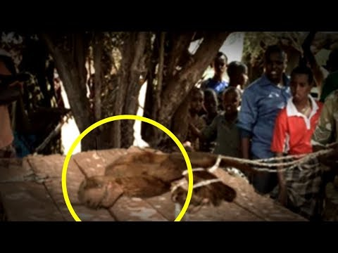 Download 5 Extinct Animals Caught on Camera & Spotted In Real Life! Mp4 baru