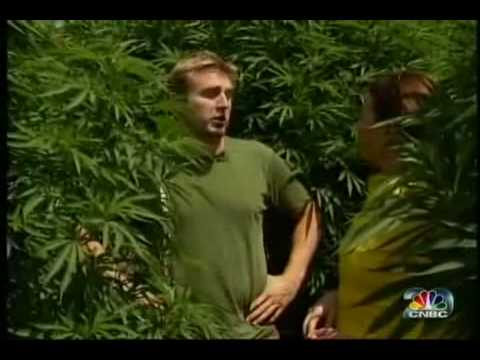 Marijuana Inc Documentary part 1 Music Videos