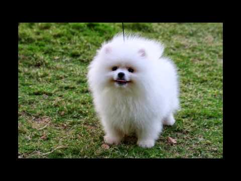 0 TOP 15 CUTEST DOG BREEDS