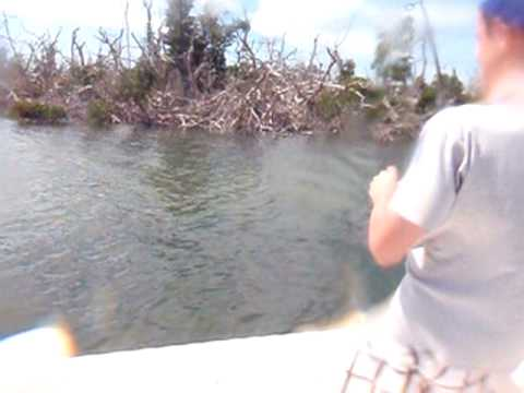 Snook Fishing in Boca Grande, FL